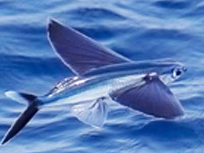Types of fish in the Sea of Cortez